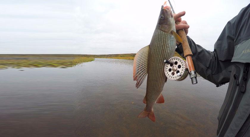 как поймать сёмгу рыбалка осенью