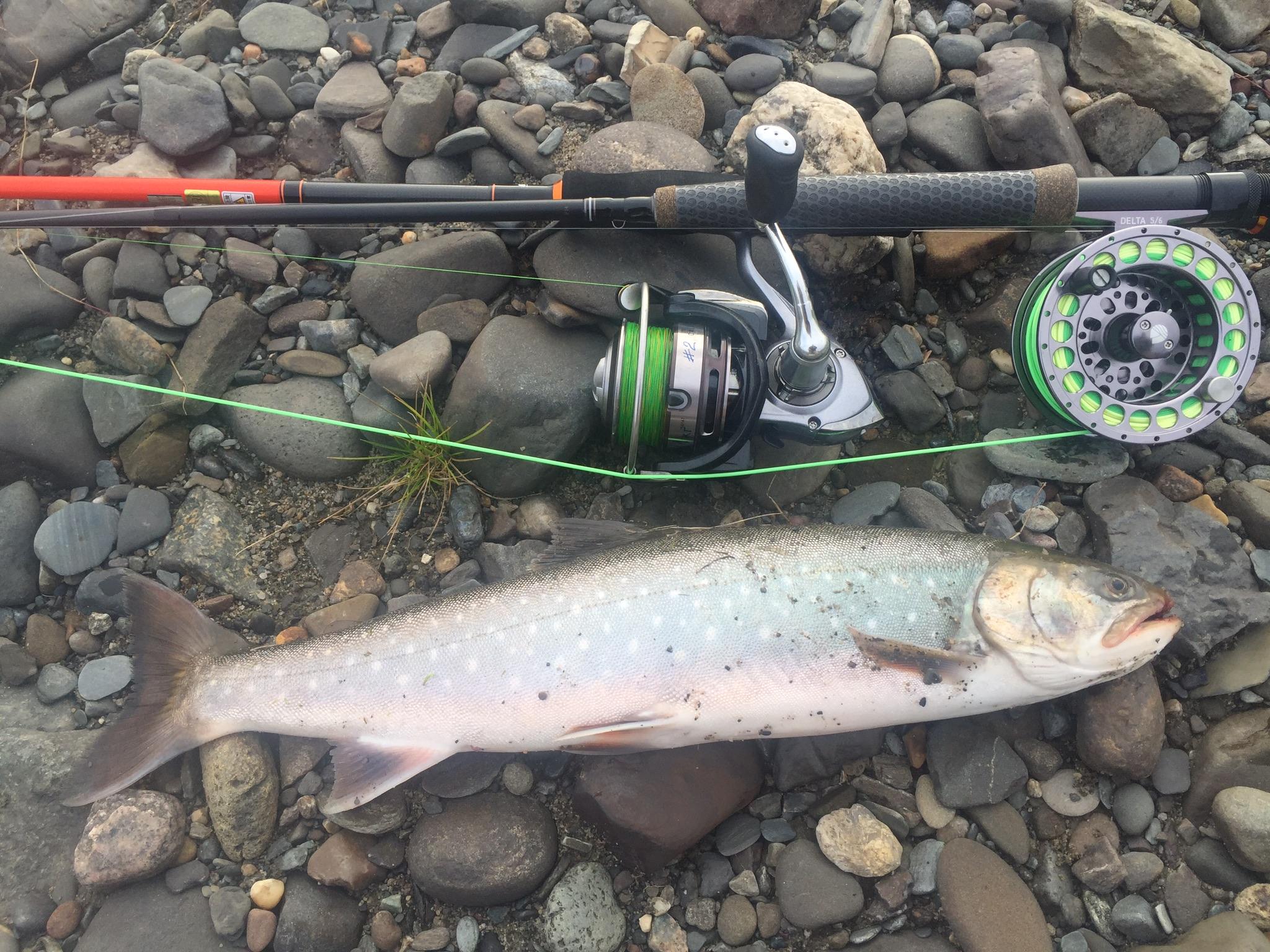 Рыбалка в архангельской области на лосося